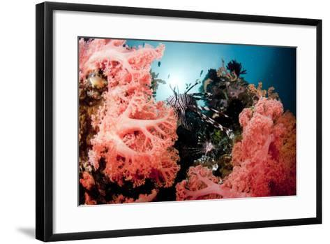 Red Lionfish and Corals-Yusuke Okada/a.collectionRF-Framed Art Print
