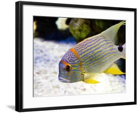 Fish Face-Photo by Kortney Thoma-Framed Art Print