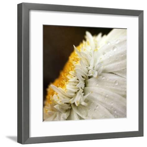 Chrysanthemum Daisy with Raindrops-Nichola Sarah-Framed Art Print
