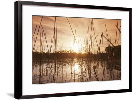 Everglades Swamp at Sunset-Buena Vista Images-Framed Art Print