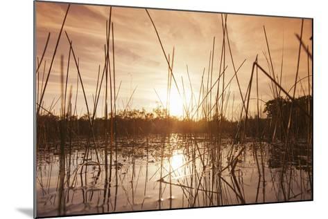Everglades Swamp at Sunset-Buena Vista Images-Mounted Photographic Print