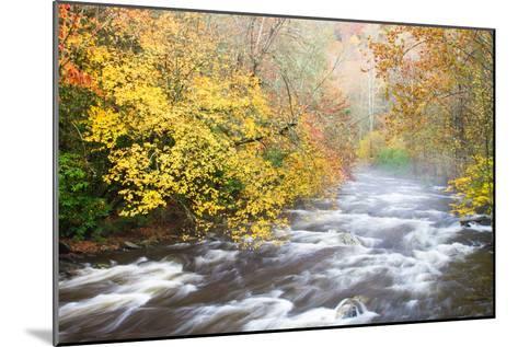 Mountain Stream with Mist and Fall Foliage-Bill Swindaman-Mounted Photographic Print