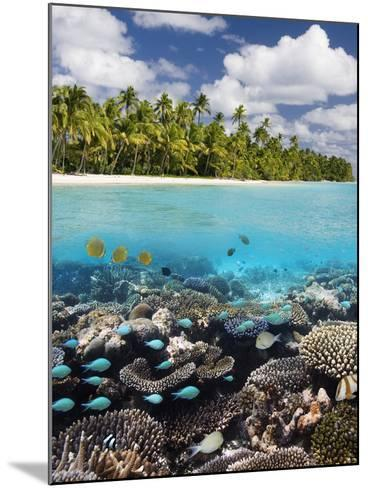 Tropical Paradise - the Maldives-Steve Allen-Mounted Photographic Print