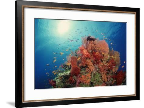 Reef Scenic of Hard Corals , Soft Corals and Tropical Fish , South Pacific-Comstock-Framed Art Print