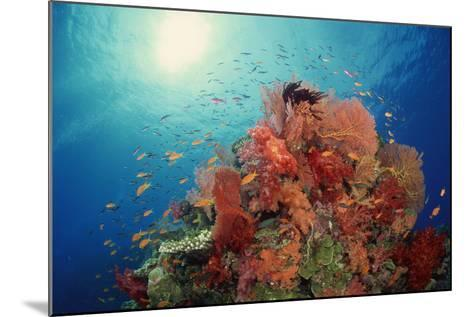 Reef Scenic of Hard Corals , Soft Corals and Tropical Fish , South Pacific-Comstock-Mounted Photographic Print