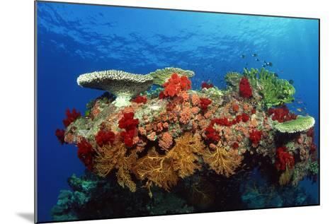 Reef Scenic of Hard Corals , Soft Corals and Tropical Fish , Malaysia-Comstock-Mounted Photographic Print