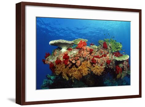 Reef Scenic of Hard Corals , Soft Corals and Tropical Fish , Malaysia-Comstock-Framed Art Print