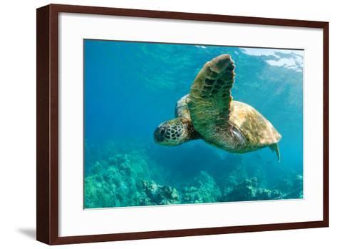 Sea Turtle Fly-M Sweet-Framed Art Print