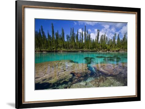 Natural Aquarium New-Caledonia.-Mako photo-Framed Art Print