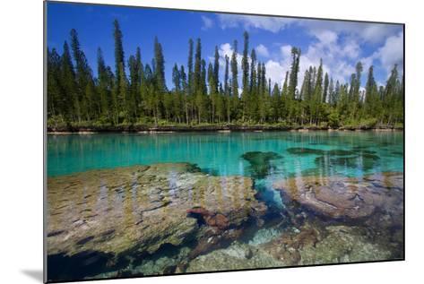 Natural Aquarium New-Caledonia.-Mako photo-Mounted Photographic Print
