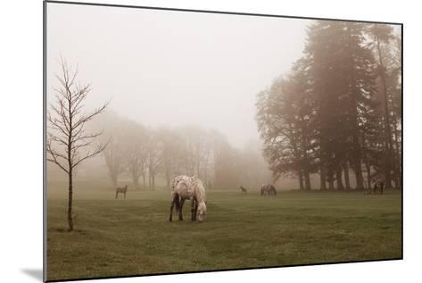 Dartmoor Ponies in Mist-Nichola Sarah-Mounted Photographic Print
