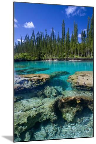 Coral and Crystal Water-Mako photo-Mounted Photographic Print