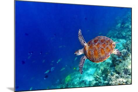Sea Turtle-Shan Shui-Mounted Photographic Print