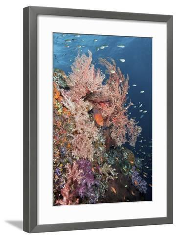 Reef Scenic and Coral Trout-Jones/Shimlock-Secret Sea Visions-Framed Art Print