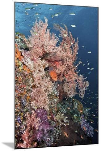 Reef Scenic and Coral Trout-Jones/Shimlock-Secret Sea Visions-Mounted Photographic Print