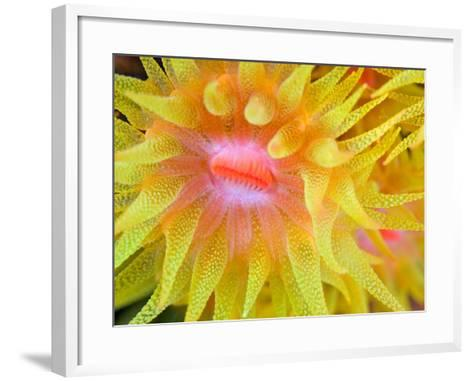 Cup Coral-Copyright Michael Gerber-Framed Art Print
