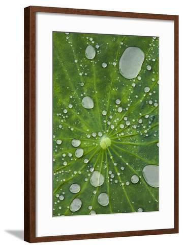 Water Droplets on a Lotus Leaf-Glen Allison-Framed Art Print