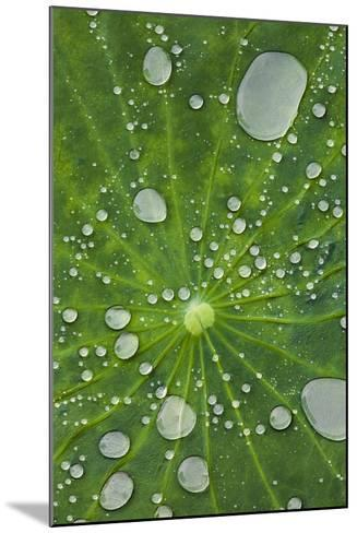 Water Droplets on a Lotus Leaf-Glen Allison-Mounted Photographic Print