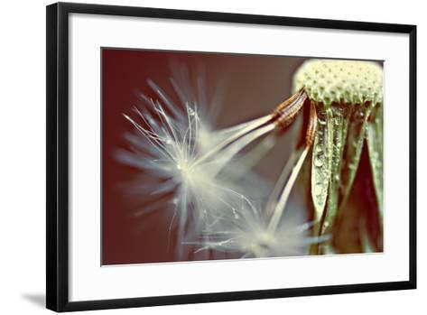 Dandelion with Droplets--Framed Art Print