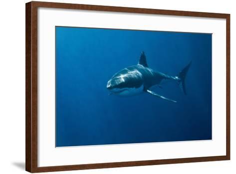 Great White Shark-John White Photos-Framed Art Print