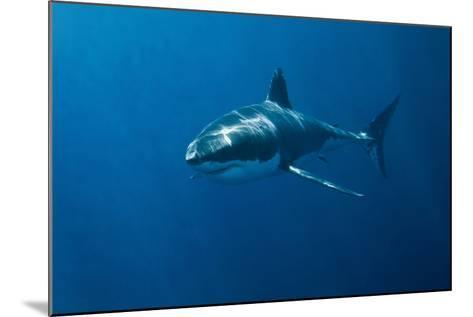 Great White Shark-John White Photos-Mounted Photographic Print