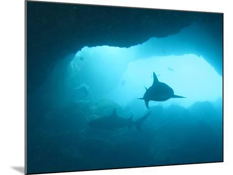 Sharks Circling in Cave-Chris Stankis-Mounted Photographic Print