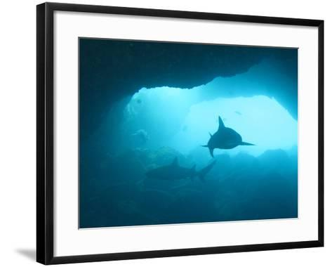 Sharks Circling in Cave-Chris Stankis-Framed Art Print