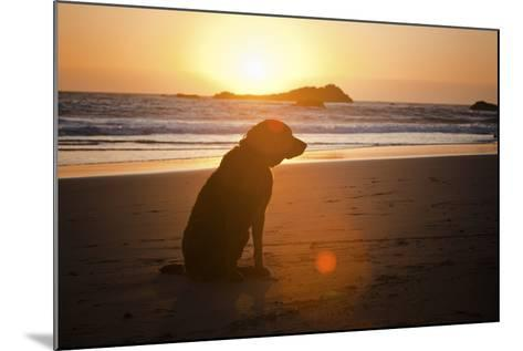 Dog at Beach-Christopher Kimmel-Mounted Photographic Print