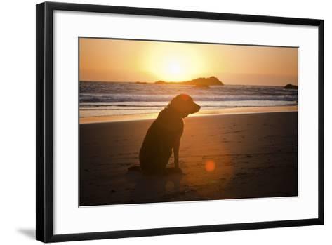 Dog at Beach-Christopher Kimmel-Framed Art Print