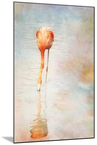 Flamingo-Roberta Murray - Uncommon Depth-Mounted Photographic Print