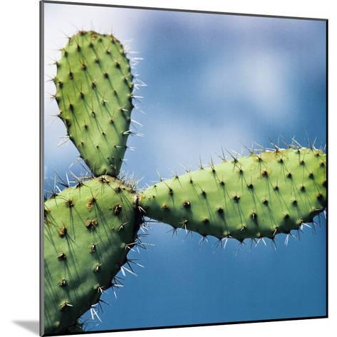 Cactus against Sky, Low Angle View-Johner Images-Mounted Photographic Print