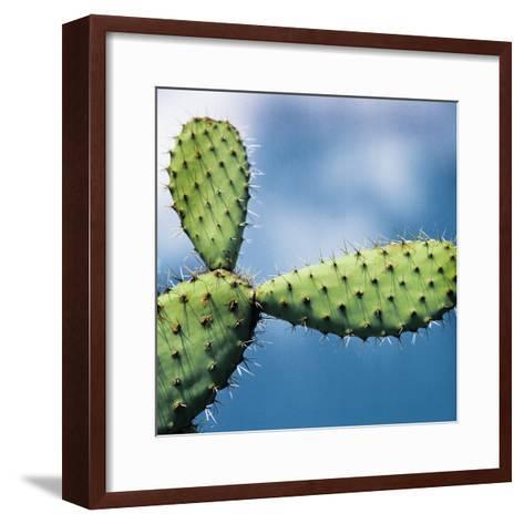 Cactus against Sky, Low Angle View-Johner Images-Framed Art Print