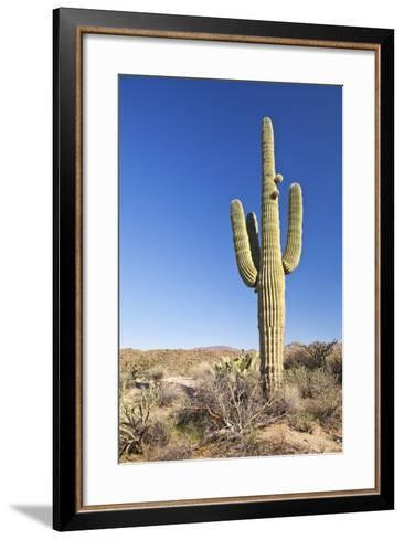 Usa, Arizona, Phoenix, Saguaro Cactus on Desert-Bryan Mullennix-Framed Art Print