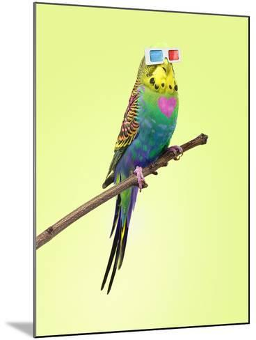 Neon Rainbow Coloured Budgie with 3D Glasses-Michael Blann-Mounted Photographic Print