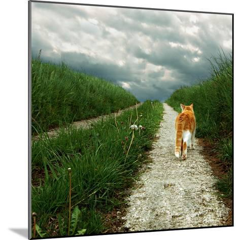 Lone Red and White Cat Walking along Grassy Path-Axel Lauerer-Mounted Photographic Print