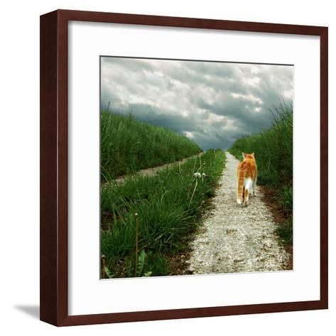 Lone Red and White Cat Walking along Grassy Path-Axel Lauerer-Framed Art Print