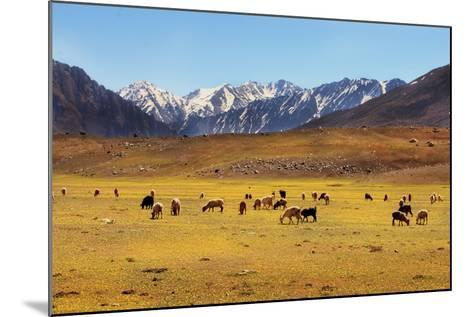 Shandoor Top-Yasir Nisar, Pakistan-Mounted Photographic Print