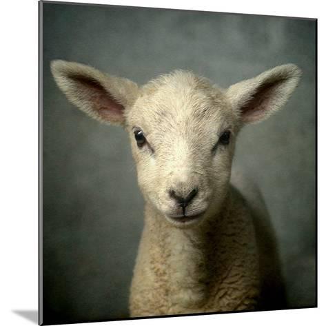 Cute New Born Lamb-bob van den berg photography-Mounted Photographic Print