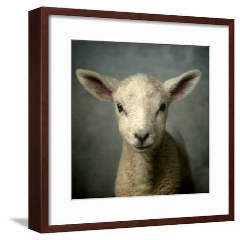 Cute New Born Lamb-bob van den berg photography-Framed Art Print