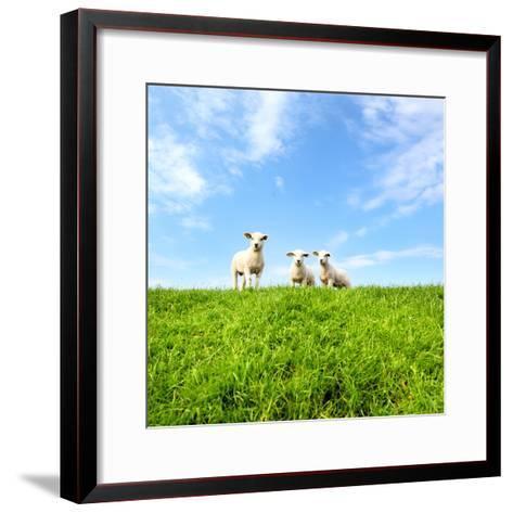 Spring Lambs-MarcelTB-Framed Art Print