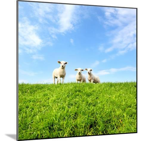 Spring Lambs-MarcelTB-Mounted Photographic Print