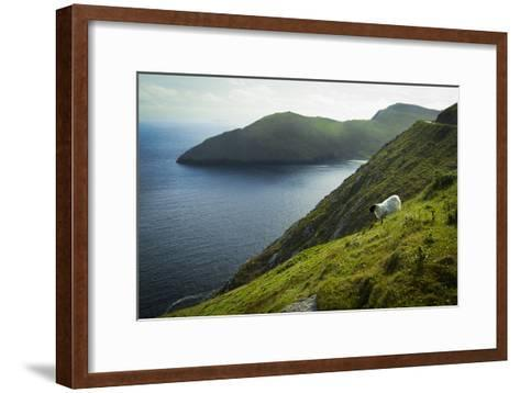 Irish Sheep-Christian Wilt-Framed Art Print