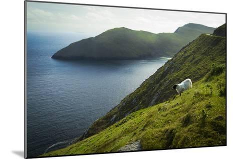 Irish Sheep-Christian Wilt-Mounted Photographic Print