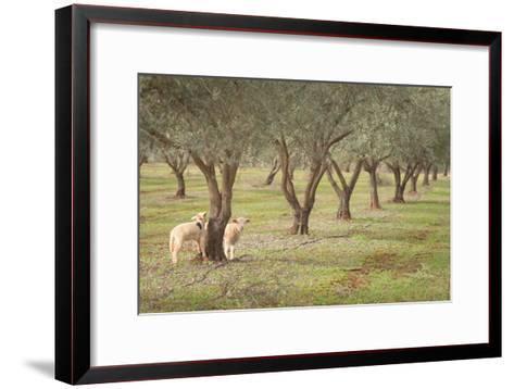 Lamb-AlexandraR-Framed Art Print