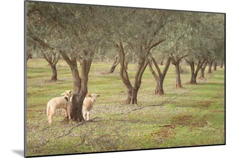 Lamb-AlexandraR-Mounted Photographic Print
