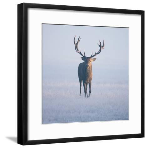 Magnificent Stag-Duncan George-Framed Art Print