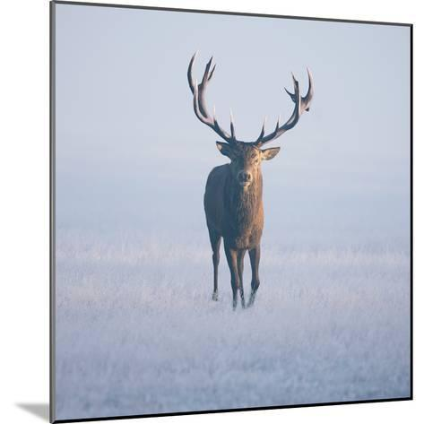 Magnificent Stag-Duncan George-Mounted Photographic Print