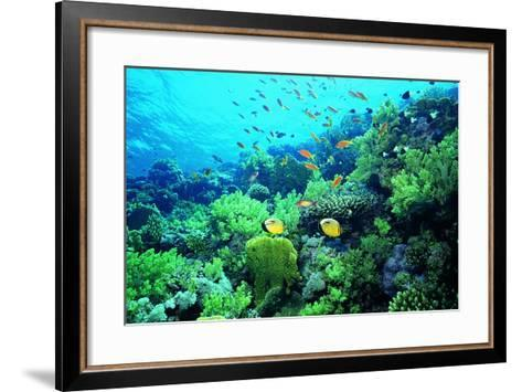 Tropical Fish Swimming over Reef-Stephen Frink-Framed Art Print