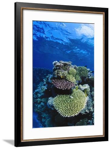 Great Barrier Reef, Australia-Radius Images-Framed Art Print