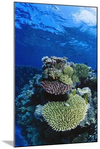 Great Barrier Reef, Australia-Radius Images-Mounted Photographic Print